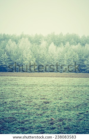 vintage photo of forest and field at winter - stock photo