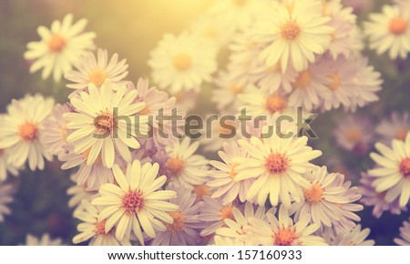 Vintage photo of garden flowers in sunset - stock photo