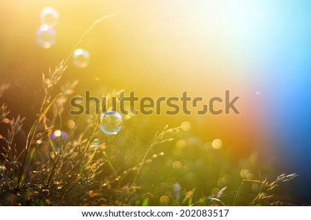 Vintage photo of grass field in sunset. summer colorful backgrou - stock photo