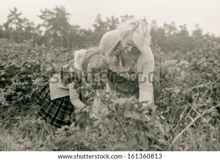 Vintage photo of mother and daughter picking wild blackberries (fifties) - stock photo