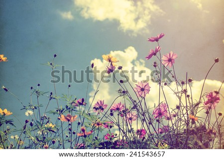 Vintage photo of nature background with wild flowers and plants - stock photo