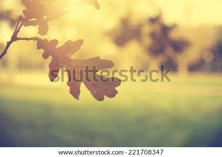 Vintage photo of oak tree leaves - stock photo