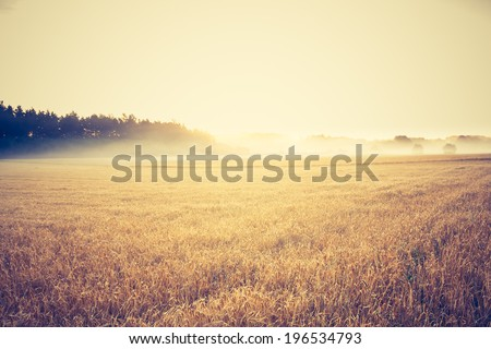 vintage photo of oat field landscape - stock photo