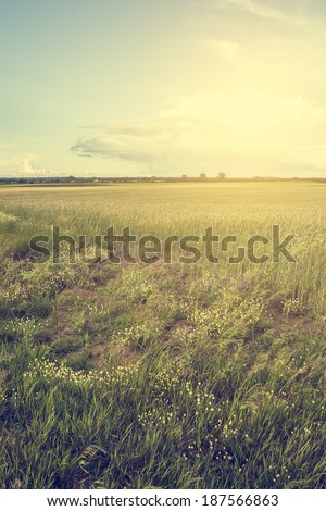 Vintage photo of pasture - stock photo