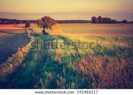 vintage photo of rural landscape. - stock photo