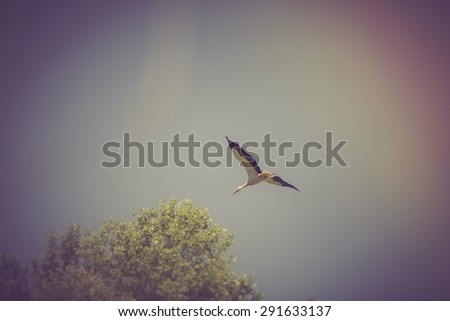 Vintage photo of stork flying on blue sky background. Beautiful stork bird photographed in Poland - stock photo
