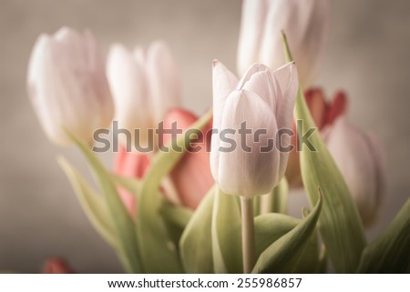 vintage photo of tulips bouquet on gray background - stock photo
