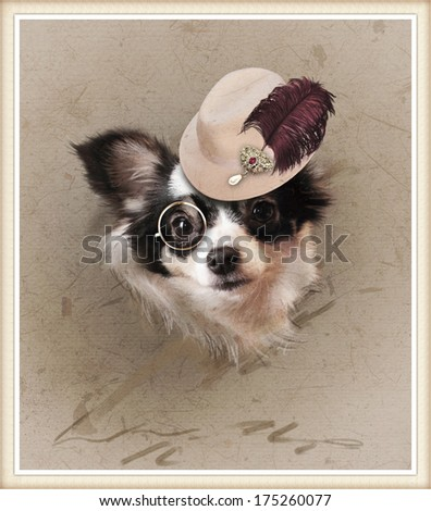 vintage photo with cute dressed chihuahua - stock photo