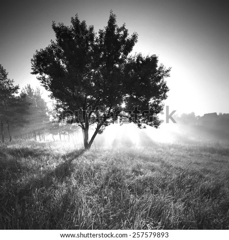 Vintage picture. Beautiful sunny morning. Monochrome colors - stock photo