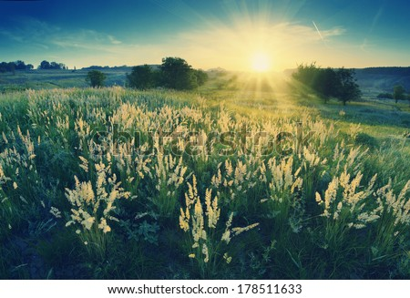 Vintage picture. Magic sunrise in the valley of high grass - stock photo