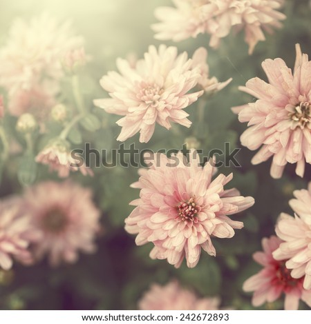 vintage pink flowers - stock photo
