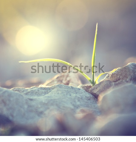 Vintage plant grows in rocks and symbolizes struggle - stock photo