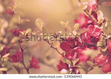 vintage red flowers - stock photo