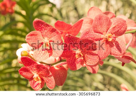 Vintage red orchid in farm - stock photo