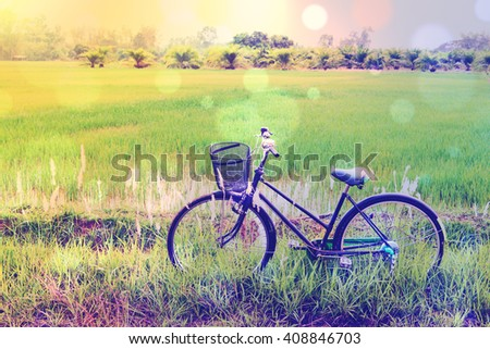 Vintage / retro color style effect with bokeh : Japanese old bike / bicycle in a green paddy field. Daily activity for families and everyone to exercise in rural area amid natural beauty and serenity. - stock photo