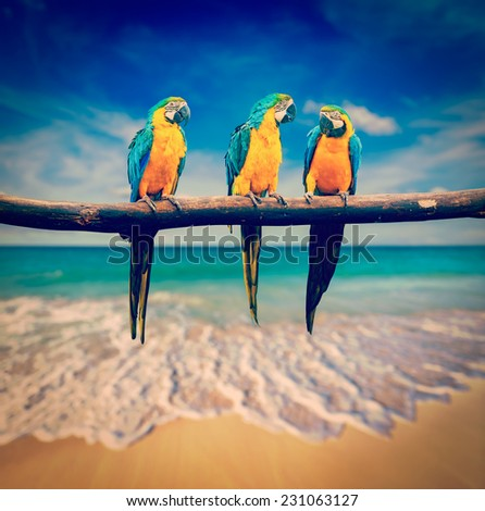 Vintage retro effect filtered hipster style image of  tropical vacation concept - three parrots (Blue-and-Yellow Macaw (Ara ararauna) aka the Blue-and-Gold Macaw) on tropical beautiful beach and  sea - stock photo