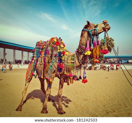 Vintage retro hipster style travel image of decorated camel at Pushkar Mela (Pushkar Camel Fair). Pushkar, Rajasthan, India - stock photo