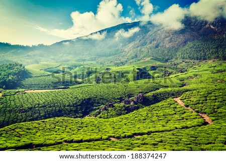 Vintage retro hipster style travel image of Kerala India travel background - green tea plantations in Munnar, Kerala, India - tourist attraction - stock photo