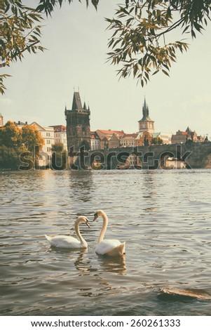 vintage retro style. Swan in Prague. birds swimming in the river near the Charles Bridge. - stock photo