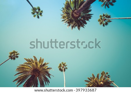 Vintage Rodeo Drive Beverly Hills Captivating crown-liked Palm Trees - stock photo