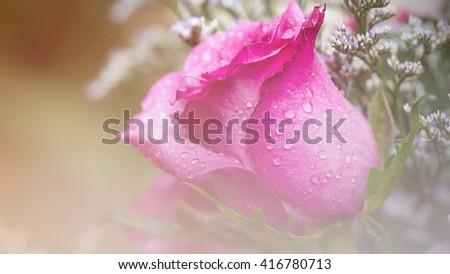 Vintage Roses - stock photo