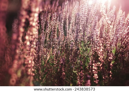 vintage rural flowers on sunrise, natural spring or summer background - stock photo