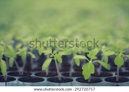 Vintage sapling of tomato World Environment Day concept instagram - stock photo
