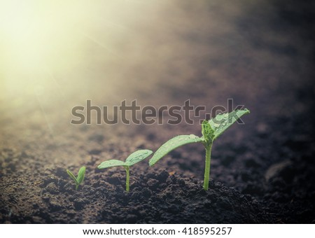 Vintage seedling growing on the ground in the rain. - stock photo