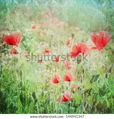 Vintage shabby chic background with red poppy - stock photo