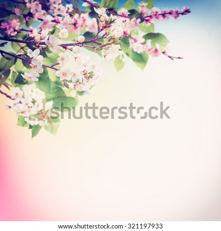 Vintage spring background with flowering tree branches - stock photo