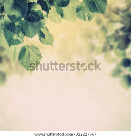 Vintage spring background with lovely flowering tree branches - stock photo