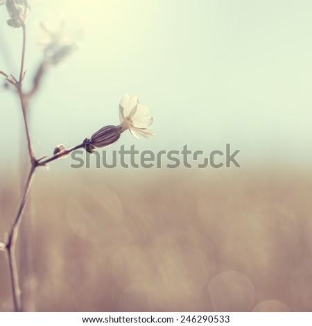 vintage spring flower - stock photo