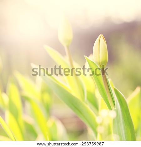 vintage spring flowers - stock photo