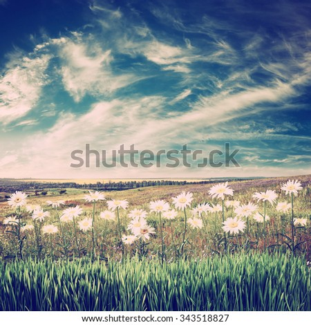 Vintage spring landscape with lovely flowers - stock photo
