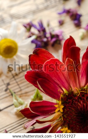 Vintage still life with wildflowers - stock photo