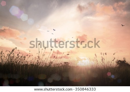 Vintage Style Art Rural Field Grass. Scenic Time Yellow Color Eco Zen Sun Idea Plant Dawn Travel Ray View Cloud Dawn Village Peace Calm Haze Card Healthy Bright Sunlight Season Pasture Heaven Valley. - stock photo