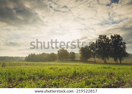 Vintage style field landscape in north Poland./ Vintage style field - stock photo