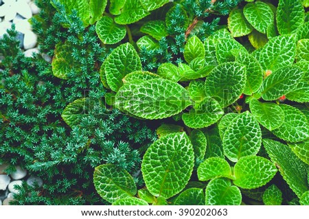 vintage style green fresh. Green background with leaves. - stock photo