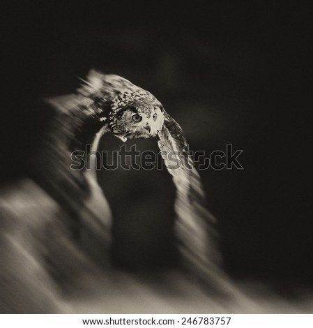 Vintage style image of a flying Bengal Eagle Owl - stock photo
