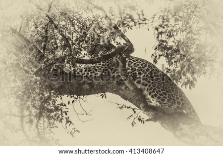 Vintage style image of a Leopard on a tree in the Etosha National Park, Namibia, Africa - stock photo