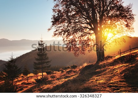 Vintage style image of fall colors tree - stock photo
