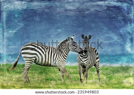 Vintage style image of Zebras in the Lake Nakuru National Park in Kenya, Africa - stock photo