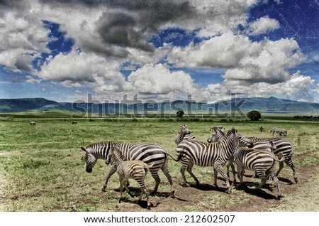 Vintage style image of Zebras in the Ngorongoro Crater, Tanzania - stock photo