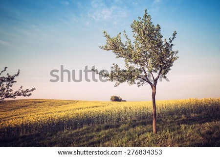 Vintage style photo of beautiful countryside view - stock photo
