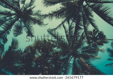 Vintage stylized palm trees over sky background - stock photo