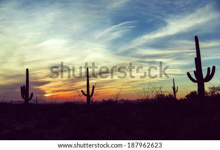 Vintage sunset and isolated giant saguaro cactus tree at Saguaro National Park, Arizona America / USA / Cactus / Wild West / New Mexico / Las Vegas / Sunset / Sky Background Desert sunset - stock photo