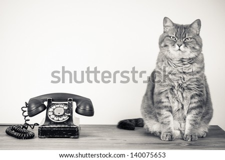 Vintage telephone and cat on table sepia photo - stock photo
