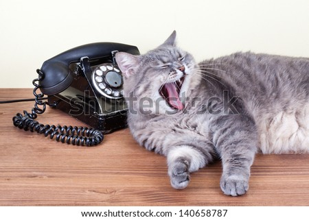 Vintage telephone and cat with mouth wide open and shows fangs - stock photo