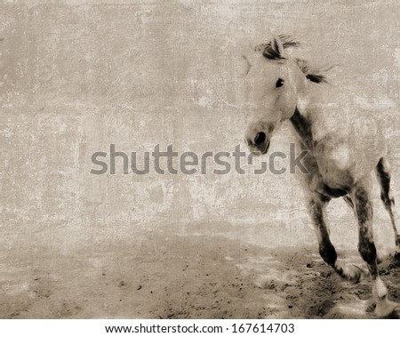 Vintage textured postcard with a running horse - stock photo