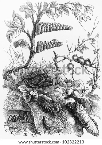 Vintage 19th century old drawing representing various species of hornets and spiders - Picture from Meyers Lexikon book (written in German language) published in 1908 Leipzig - Germany. - stock photo